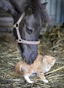 Horse and kitten