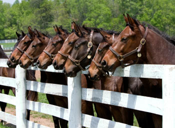 Interview with Robin Petrasek: Choosing Thoroughbred Horses