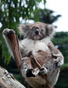 Koala God